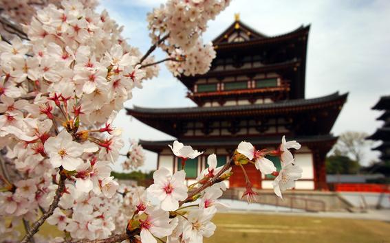 razones por las que debes visitar el continente asiatico 5