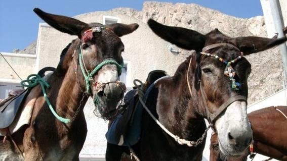 grecia prohibe viajes en burro a turistas con sobrepeso 1