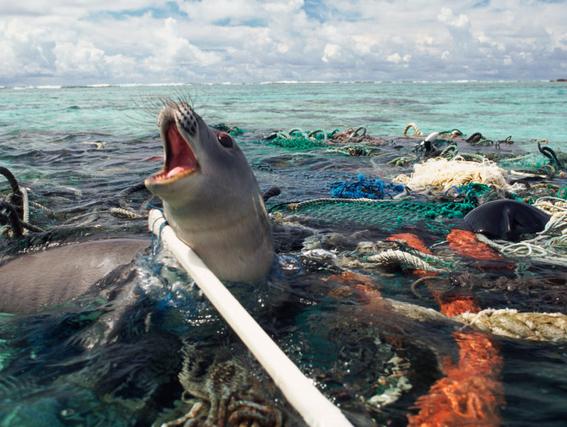 sodastream maquina lucha contra isla de basura en el caribe 4