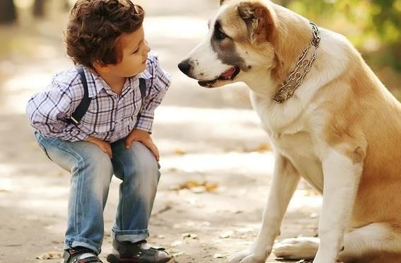 estudio determina que perros entienden las palabras 2