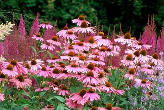 libera cofepris 18 plantas medicinales para uso legal mexico 1