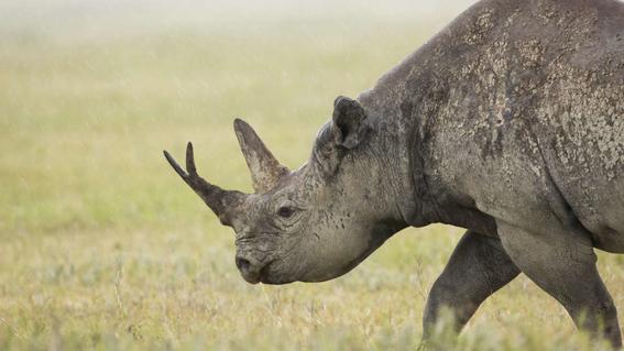 costara millones de anos que mamiferos se recuperen a humanidad 1