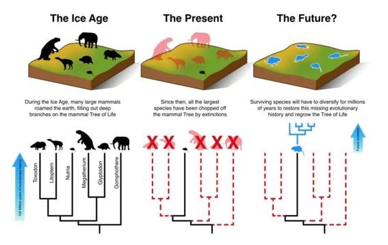 costara millones de anos que mamiferos se recuperen a humanidad 2