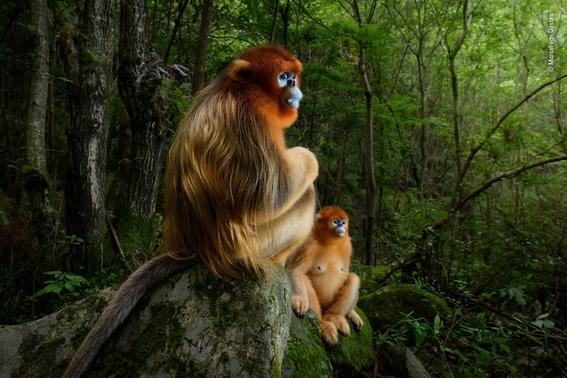 wildlife photographer of the year 2018 1