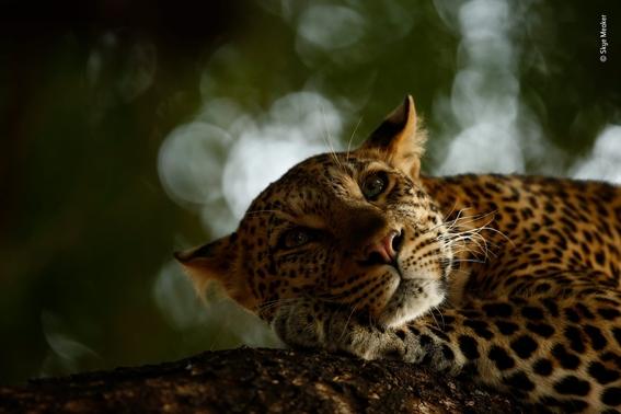 wildlife photographer of the year 2018 2