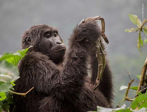 wildlife photographer of the year 2018 6