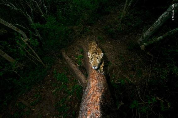 wildlife photographer of the year 2018 12