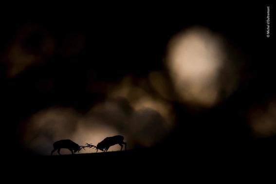 wildlife photographer of the year 2018 13