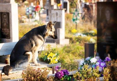 dia de muertos para mascotas 1