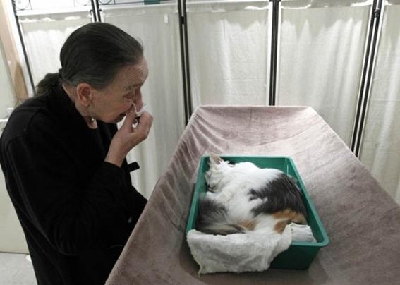 dia de muertos para mascotas 3