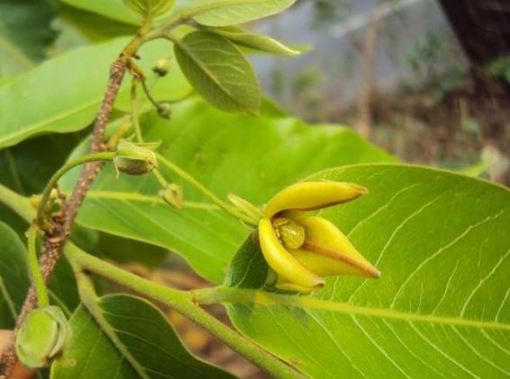 plantas medicinales 13