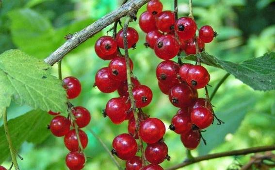 plantas medicinales 12