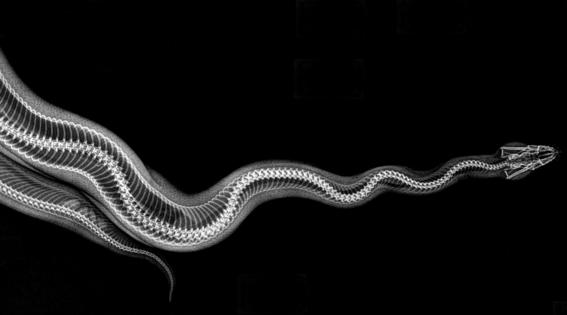 zoologico de oregon comparte rayos x de animales 1