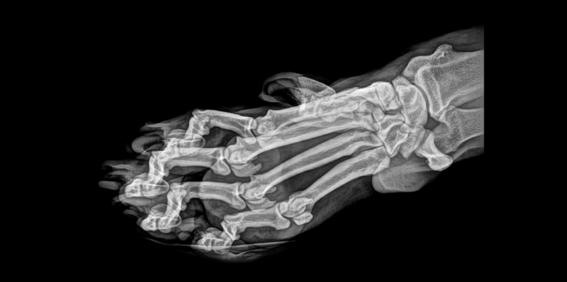 zoologico de oregon comparte rayos x de animales 3