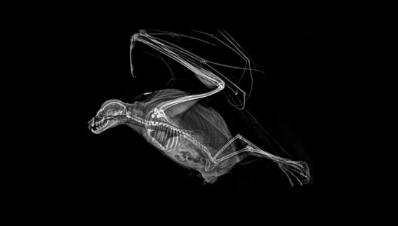 zoologico de oregon comparte rayos x de animales 4