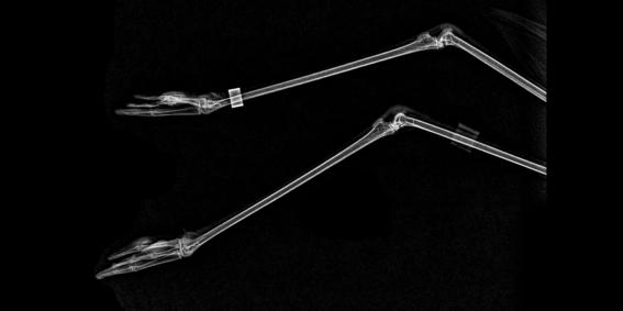 zoologico de oregon comparte rayos x de animales 9