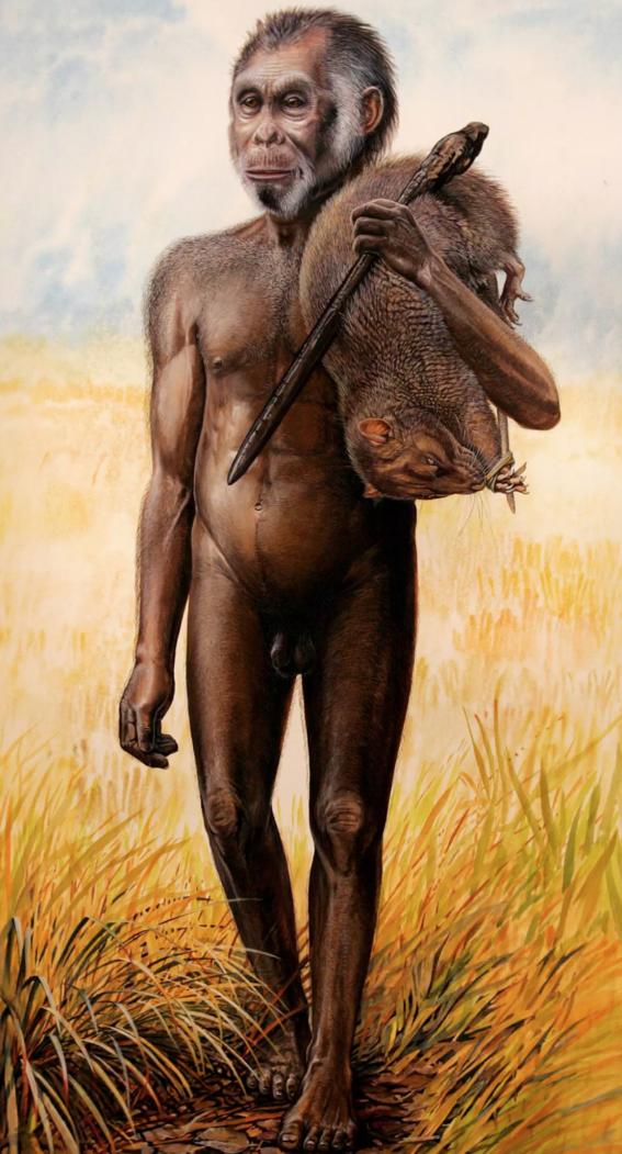 por que se extinguieron los hobbits homo floriesiensis 2
