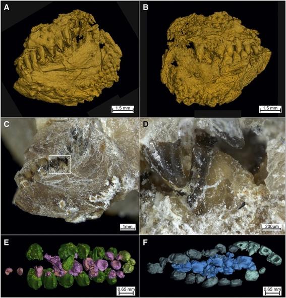 descubren fosil con dientes de pirana que vivia en el jurasico 3