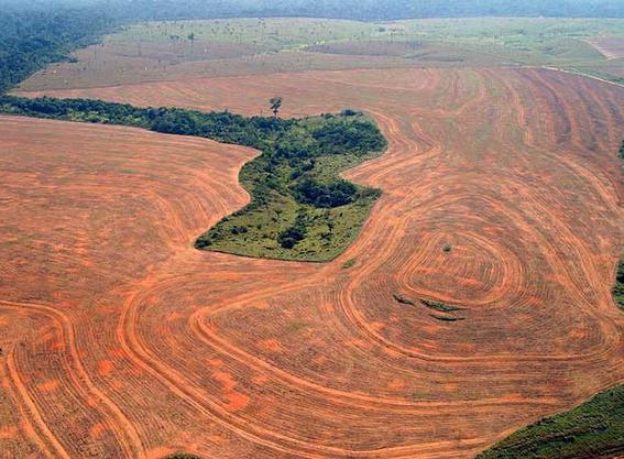amazonia amenazada por la politica de brasil si gobierna bolsonaro 3