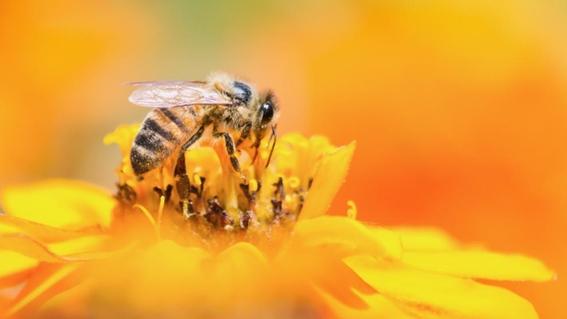desaparicion masiva de los insectos 1