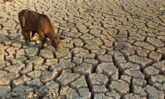 como se puede evitar el cambio climatico 1