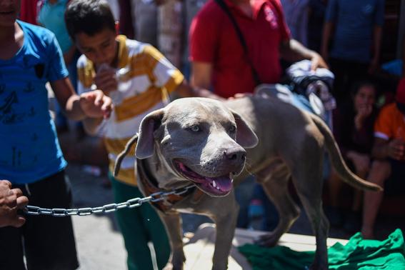 bolillo el perro hondureno de la caravana migrante 1