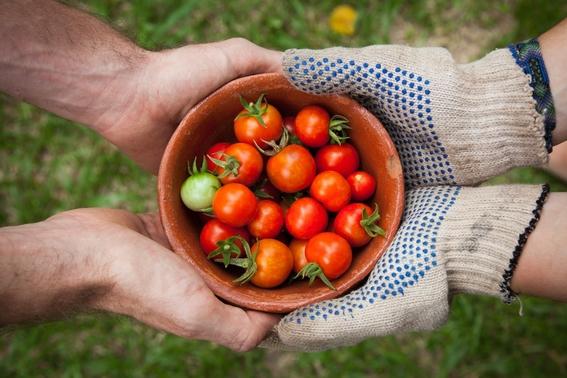 comer alimentos organicos reduce los riesgos de cancer 4