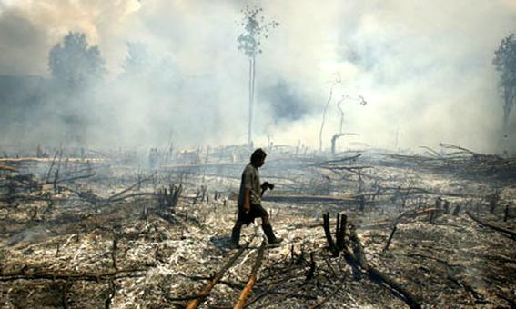 como el aceite de palma destruye los bosques tropicales 1