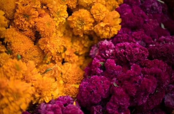 floricultores mexiquenses de flor de cempasuchil 2