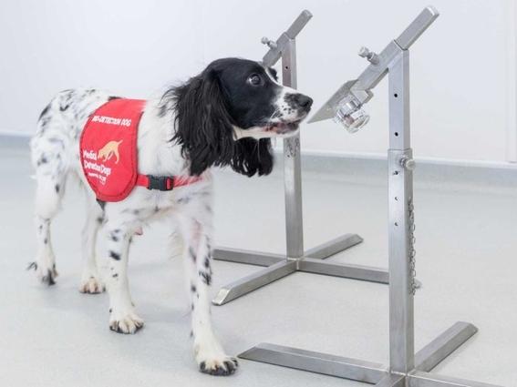 perros pueden entrenarse para detectar malaria 2