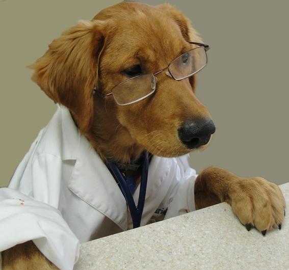 perros pueden entrenarse para detectar malaria 1
