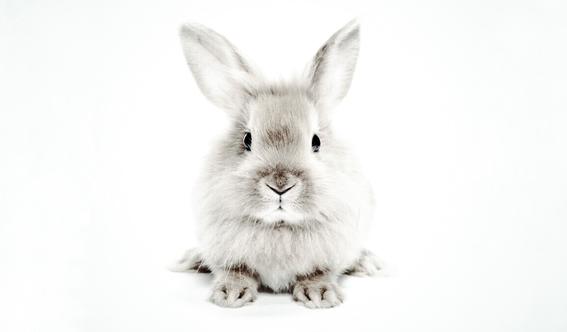 california prohibe la venta de cosmeticos probados en animales 1