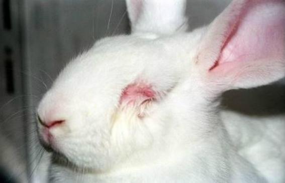 california prohibe la venta de cosmeticos probados en animales 2
