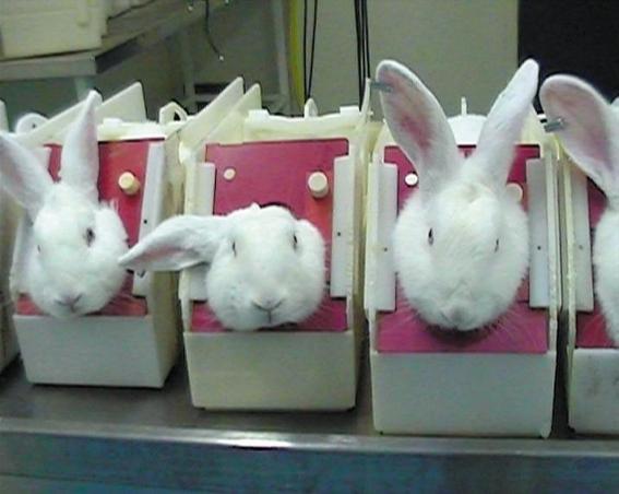 california prohibe la venta de cosmeticos probados en animales 4