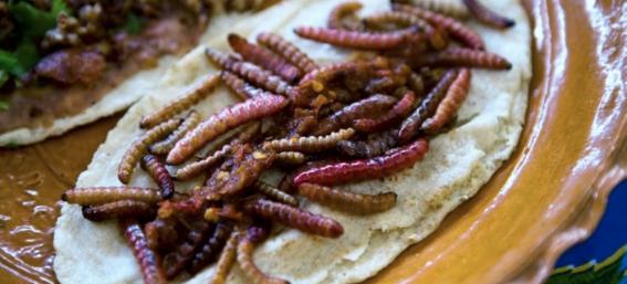 lugares para comer insectos en la cdmx 4