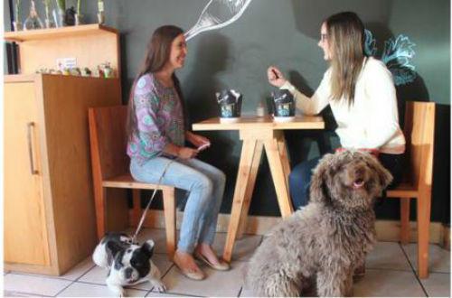 restaurantes pet friendly en la condesa 1