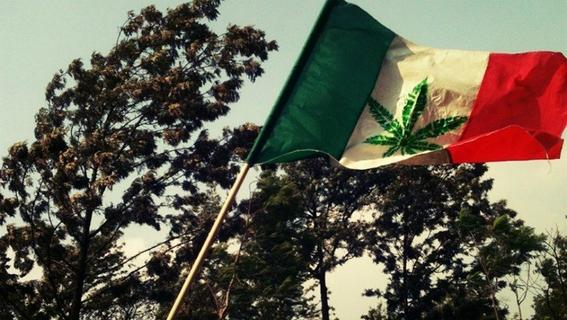 sentencia de la scjn sobre la marihuana 2