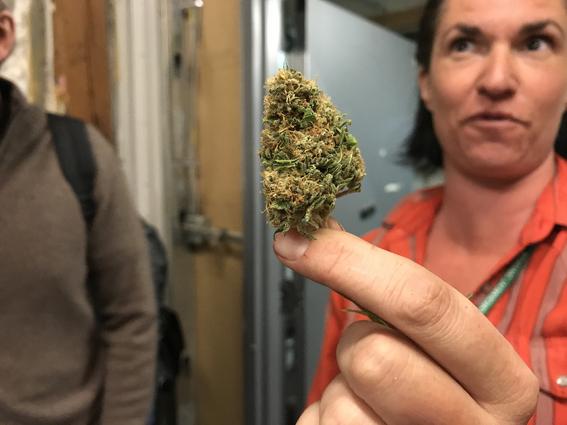 legalizacion de la marihuana en mexico 4