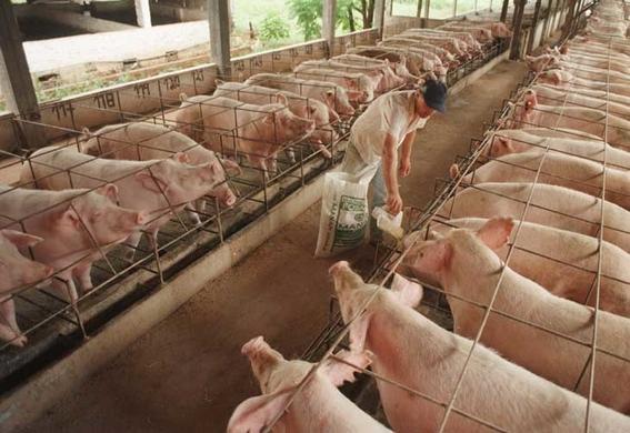 california prohibe venta de carne de cerdo y ternera 2022 3