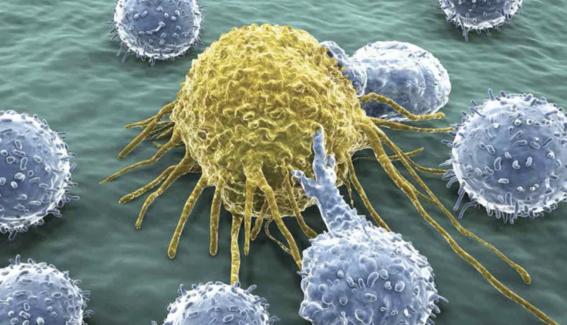 virus del valle de seneca podria destruir tumores cancerigenos 4