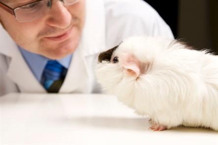 la crueldad animal por la industria de cosmeticos 1