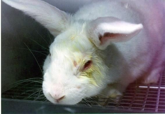 la crueldad animal por la industria de cosmeticos 2