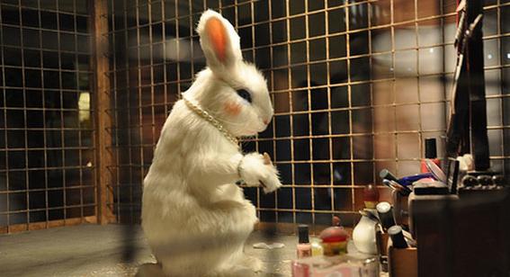 la crueldad animal por la industria de cosmeticos 3