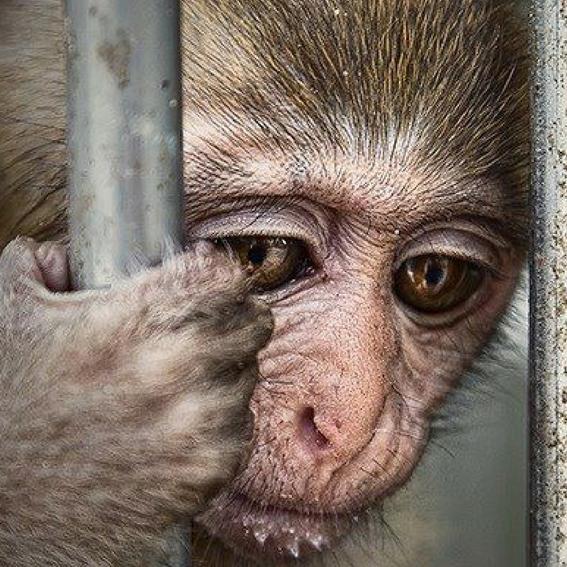 trafico de especies es la tercera actividad ilicita que mas recursos genera 1