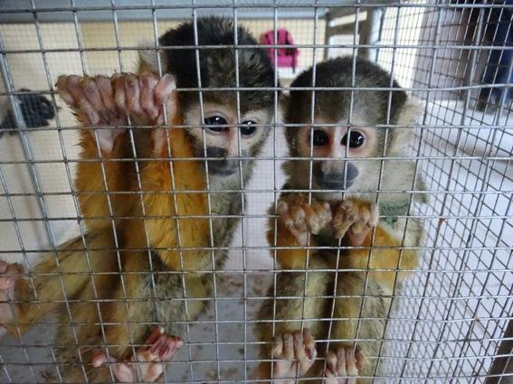 trafico de especies es la tercera actividad ilicita que mas recursos genera 4