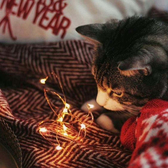 cosas divertidas y diferentes para hacer en navidad 2