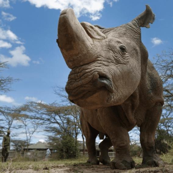china mantendra prohibicion de comercio de productos de tigre y rinoceronte 2