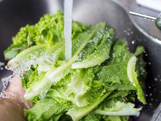 prohiben lechuga romana por brote de e coli en eua 5