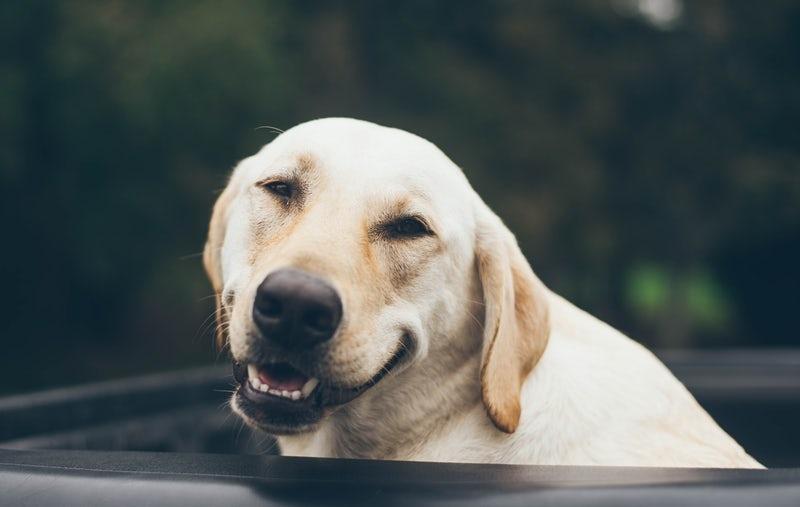 Alimentos que nunca debes darle de comer a tu perro 4