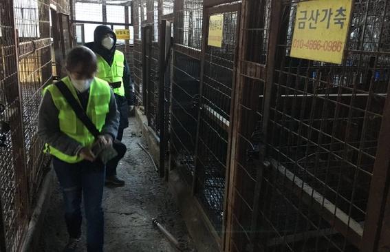 cierran matadero de perros mas grande de corea del sur 1